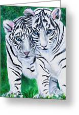 White Tiger Cubs Greeting Card by Bette Orr