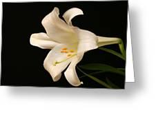 White Trumpet Greeting Card by Doug Norkum
