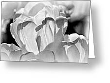 White Tulip Greeting Card by Marty Koch