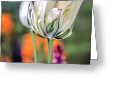 White Tulip Splash of Color Greeting Card by Julie Palencia