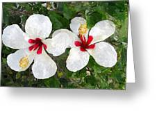 White Twin Hibiscus With Red Veriegation Greeting Card by Buzz  Coe