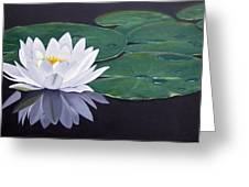 White Water Lilly Greeting Card by Birgit Coath