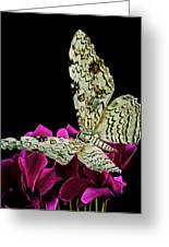 White Witch Moth Resting At Midnight  Greeting Card by Leslie Crotty