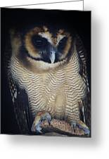 Who Gives A Hoot Greeting Card by Paulette Thomas