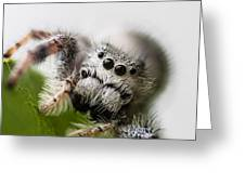 Who You Looking At  Greeting Card by Craig Lapsley