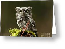 Whooo Goes There... Eastern Screech Owl  Greeting Card by Inspired Nature Photography Fine Art Photography