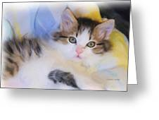 Wide Eyed Kitten Greeting Card by Kenny Francis