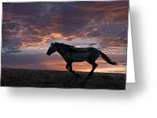 Wild And Free Greeting Card by Leland D Howard