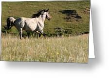 Wild Appaloosa Running away Greeting Card by Sabrina L Ryan