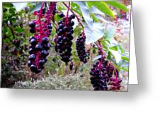 Wild Berry Greeting Card by George Griffiths