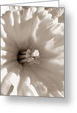 Wild Daffodil Greeting Card by Chris Berry