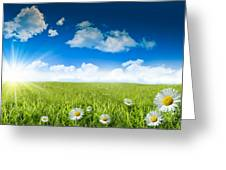 Wild Daisies In The Grass With A Blue Sky Greeting Card by Sandra Cunningham