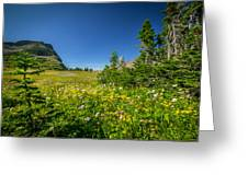 Wild Flowers Glacier National Paintedpark   Greeting Card by Rich Franco
