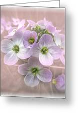 Wild Flowers Greeting Card by Fiona Messenger
