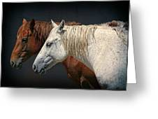Wild Horses Greeting Card by Daniel Hagerman