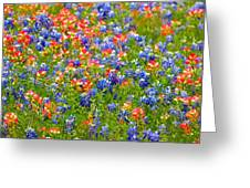 Wild In Texas Greeting Card by David  Norman