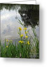 Wild Iris By The Pond Greeting Card by Ausra Paulauskaite