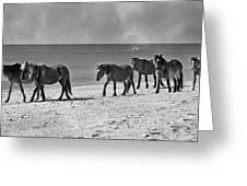 Wild Mustangs Of Shackleford Greeting Card by Betsy A  Cutler