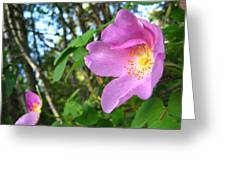 Wild Rose Greeting Card by Shirley Sirois