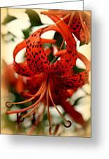 Wild Smokies Lily Greeting Card by Karen Wiles