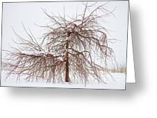 Wild Springtime Winter Tree Greeting Card by James BO  Insogna