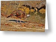 Wild Turkey Greeting Card by Al Powell Photography USA