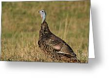 Wild Turkey Greeting Card by Linda Freshwaters Arndt