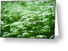 Wild Vegetation Greeting Card by Alexander Senin