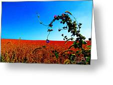 Wildflower And Soy Greeting Card by Tina M Wenger