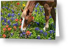 Wildflower Feast Greeting Card by Lynn Bauer