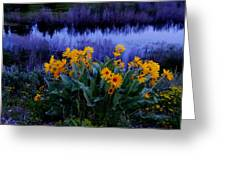 Wildflower Reflection Greeting Card by Dan Sproul
