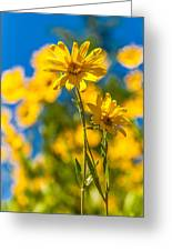 Wildflowers Standing Out Greeting Card by Chad Dutson