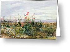 Wildflowers With A View Of Dublin Dunleary Greeting Card by A Nicholl