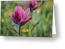 Wildflowers5 Greeting Card by Aaron Spong