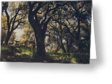 Wildly And Desperately My Arms Reached Out To You Greeting Card by Laurie Search