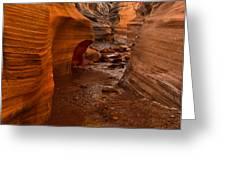 Willis Creek Slot Canyon Greeting Card by Robert Bales