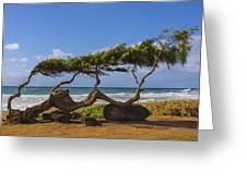 Wind Blown Tree 2 - Kauai Hawaii Greeting Card by Brian Harig