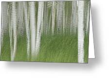 Wind In The Aspen Greeting Card by Nancy Myer