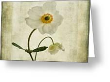 Windflowers Greeting Card by John Edwards