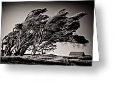 Windswept Greeting Card by Dave Bowman