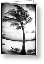 Windy Palm Greeting Card by John Rizzuto