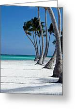Windy Paradise Greeting Card by Sophie Vigneault