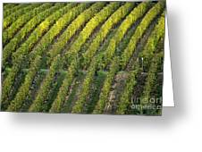 Wine Acreage In Germany Greeting Card by Heiko Koehrer-Wagner