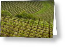 Wine Design Greeting Card by Jean Noren