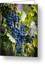 Wine Grapes Greeting Card by Tetyana Kokhanets