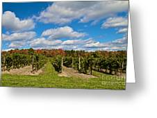 Wine In Waiting Greeting Card by William Norton