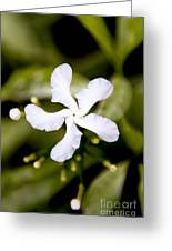 Winged Petals Greeting Card by Thanh Tran
