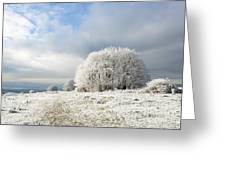 Winter Greeting Card by Anne Gilbert