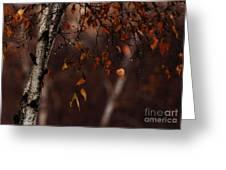 Winter Birch Greeting Card by Linda Knorr Shafer