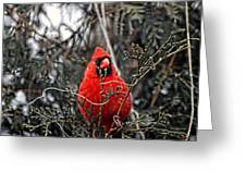Winter Cardinal 03 Greeting Card by Thomas Woolworth